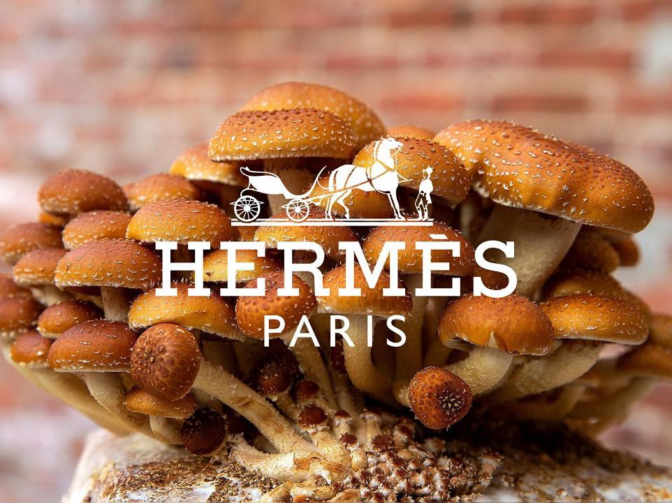"""FW2021// Hermes: la """"Victoria"""" del futuro è veg-friendly"""