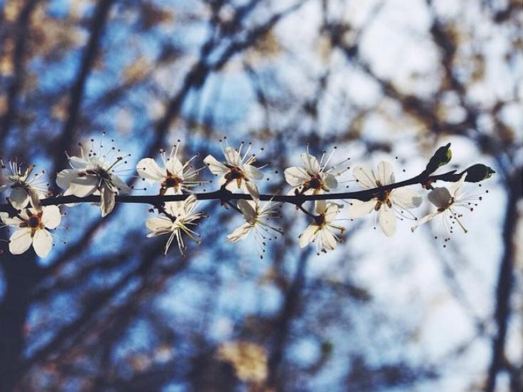 To SPRING: quando la primavera è un verbo (irregolare)