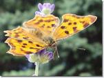 Schmetterling Entfaltung Hypnose coaching wien Dagmar Gollatz