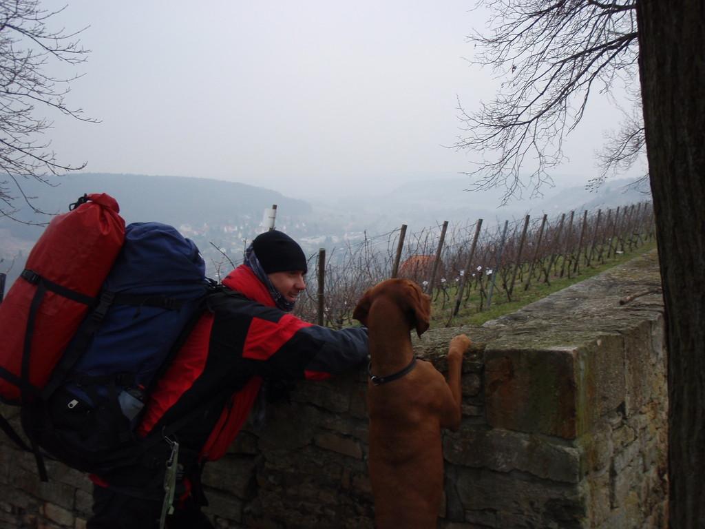 Laika und Sebastian schauen über Freyburg