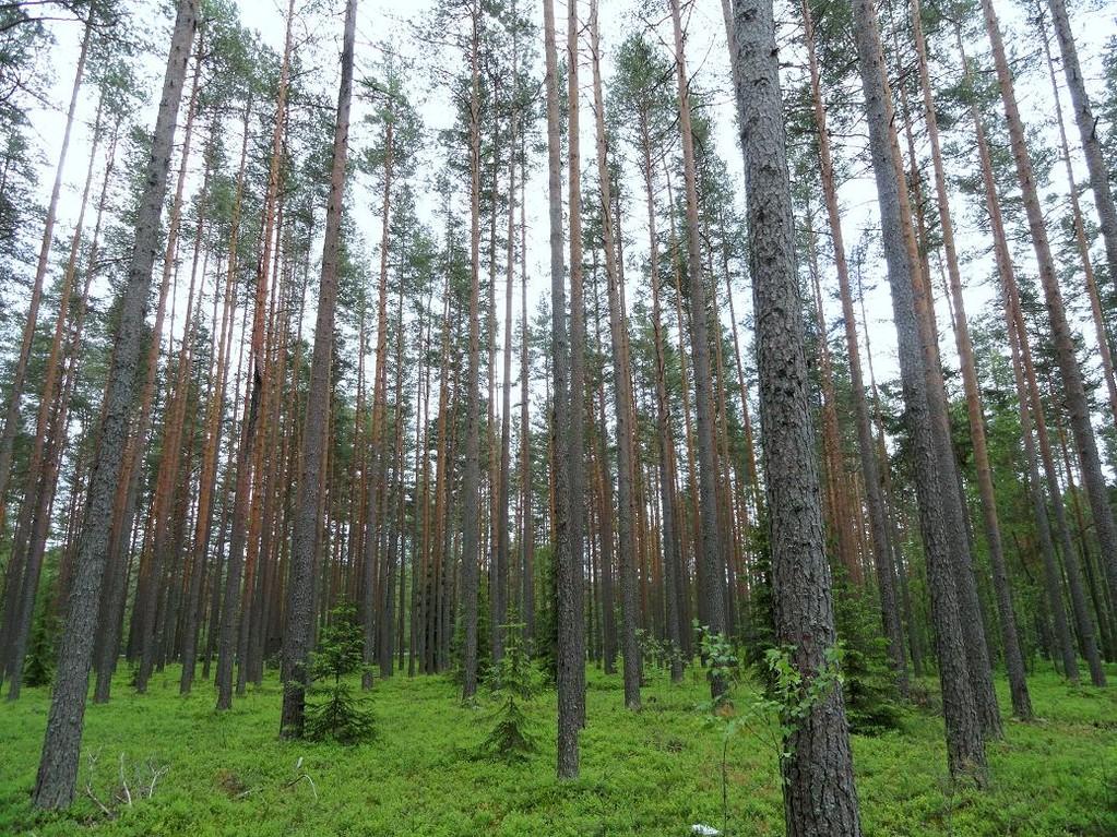 Прогулочный лес