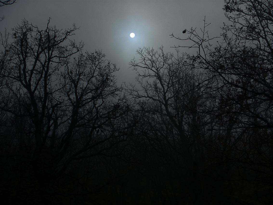 Nocturno de día (Bosque de la Herrería, El Escorial, Madrid)