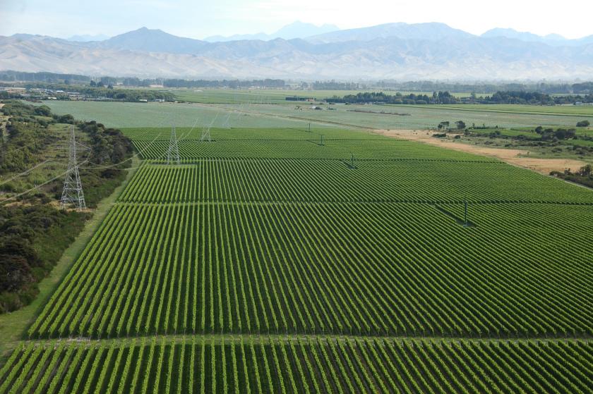 Mer de vigne en Nouvelle-Zélande (photo issue d'un blog de voyage intitulé breazaland) https://breizealand.wordpress.com/
