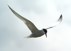Hier geht es zu den Vögeln