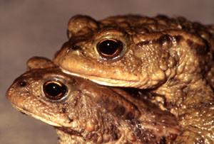 Hier geht es zu den Amphibien