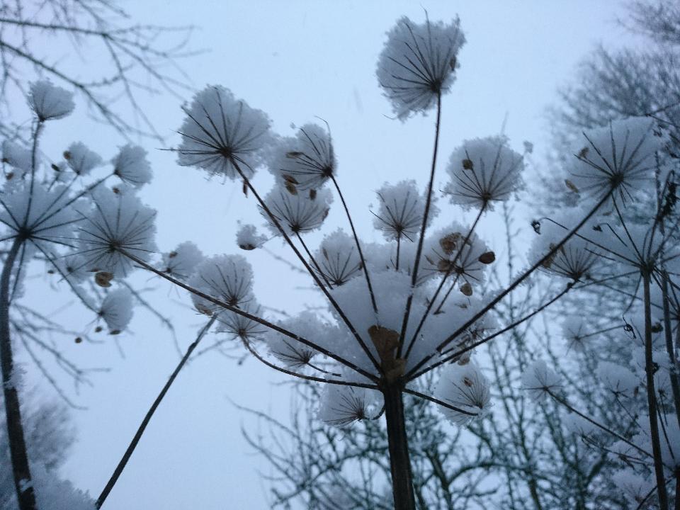 Foto: C.Seidel   -Winter-