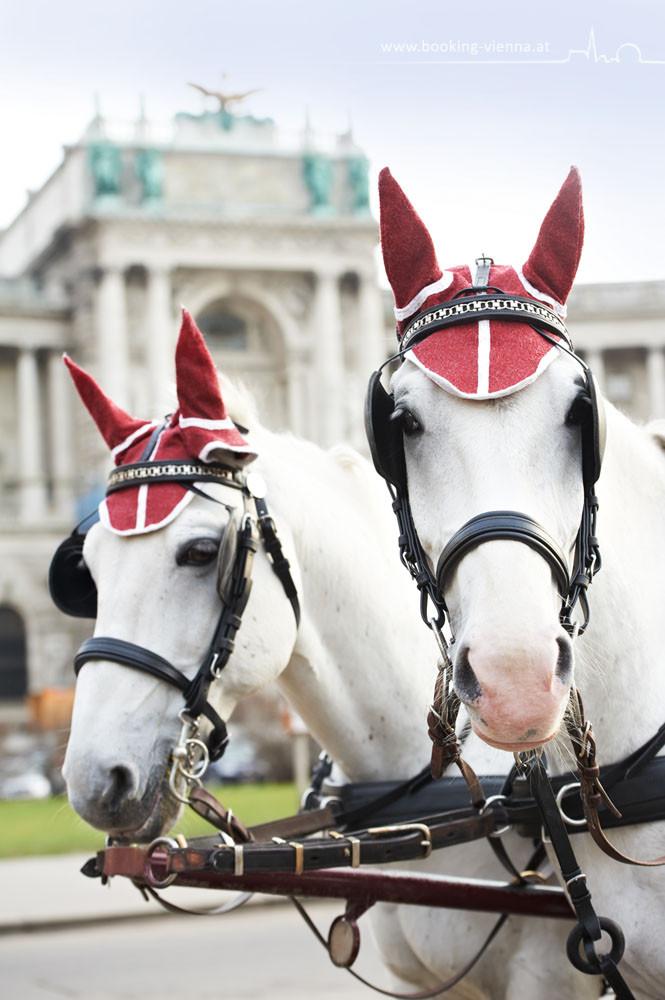 Tradition in Wien, booking Vienna, günstige Hotels Wien, Hotel Wien im Zentrum buchen