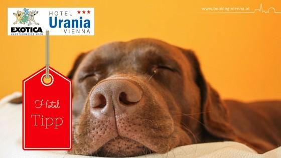 Die Haustiermesse Wien ist eine Messe für Haustiere und Haustierbedarf. Günstig Hotel buchen, unser Empfehlung Hotel Urania, gute Bewertung mit Hund