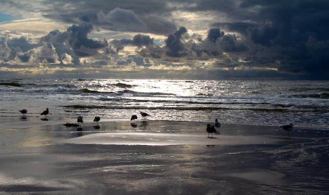 SYLT SEA