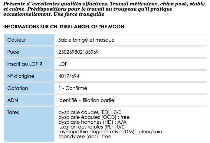 © Angel of the Moon-> http://angelofthemoon.chiens-de-france.com/berger-hollandais.html