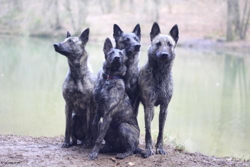Mama Amanda mit ihren 3 Töchterchen