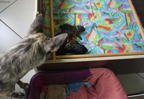 Flama beobachtet voller Erstaunen ihre Halbgeschwister!