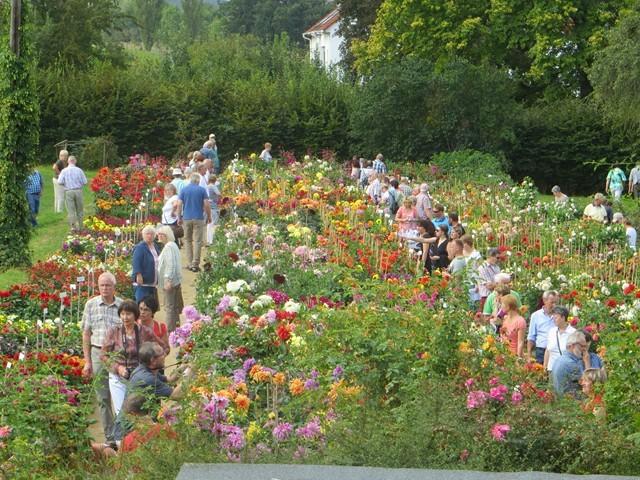 Es war ordentlich was los im Sortengarten in unserer Gärtnerei!