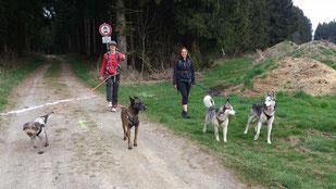 Dogtrekking Dogtrekking Dogtrekking Elbsandstein-Dogtrekking ESDT Harz-Dogtrekking
