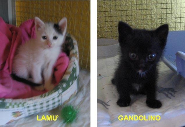 Lamu' e Gandolino