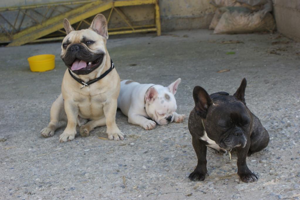 Erni,Koi und Emma