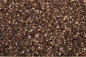 semilla de escarola