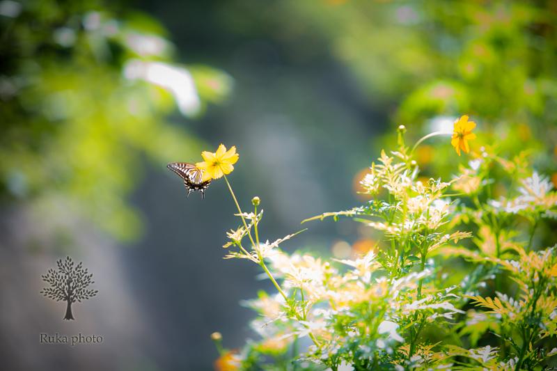 植物や自然が好きで、それにかかわる仕事に就きたかった。今、自然の力を借りて写真を撮っている。