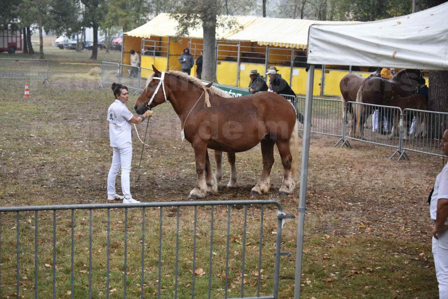 Concours Régional de chevaux de traits en 2017 - Trait COMTOIS - Jument suitée - ROXIE 7 - 02