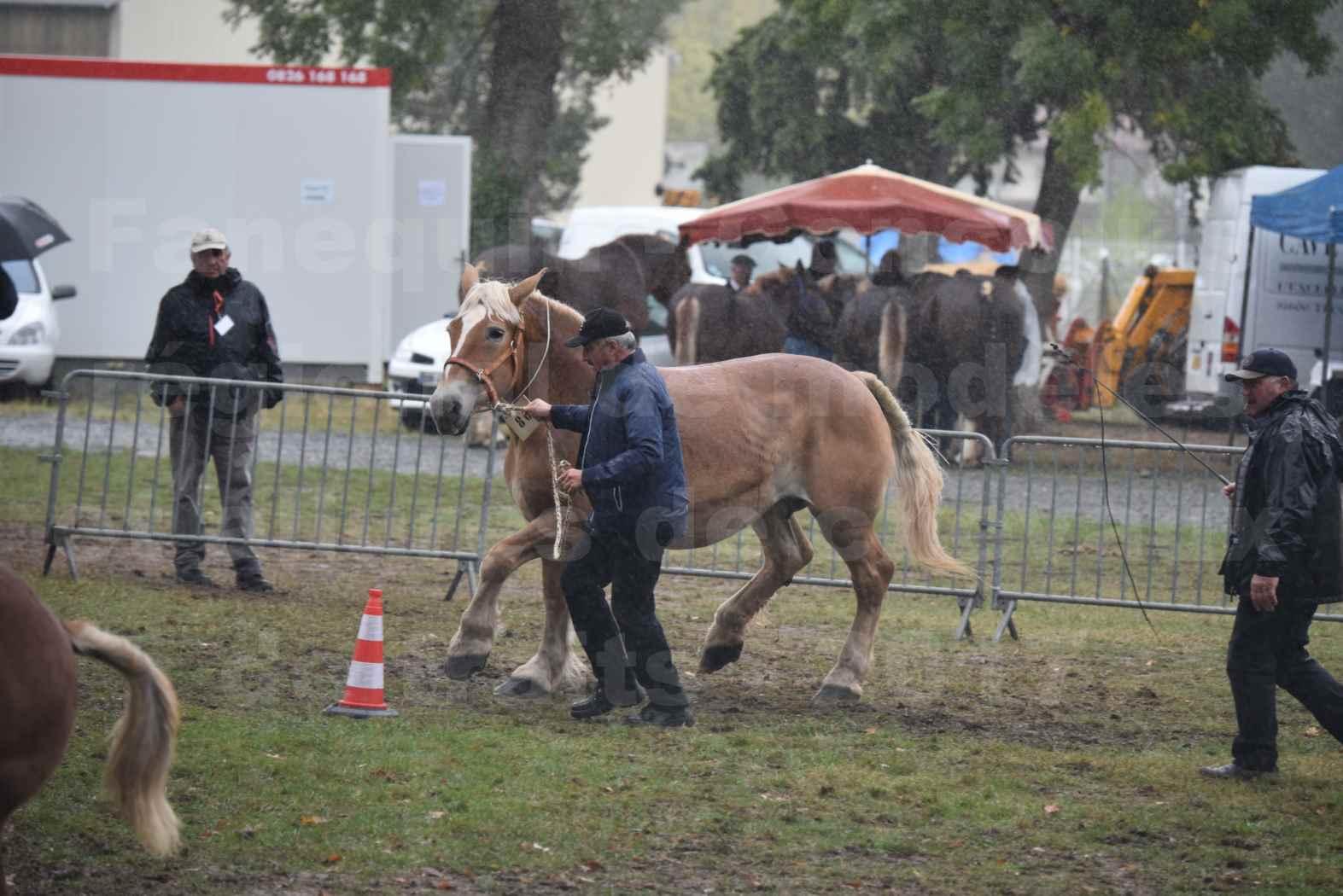Concours Régional de chevaux de traits en 2017 - Trait BRETON - Jument suitée - OREE DES AMOUROUX - 10