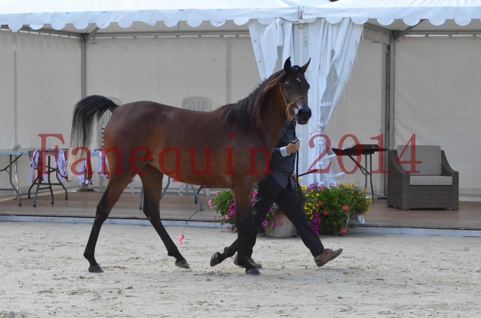 Championnat de FRANCE 2014 - Amateurs - KAL'ELLE D'ELHORIA - 27