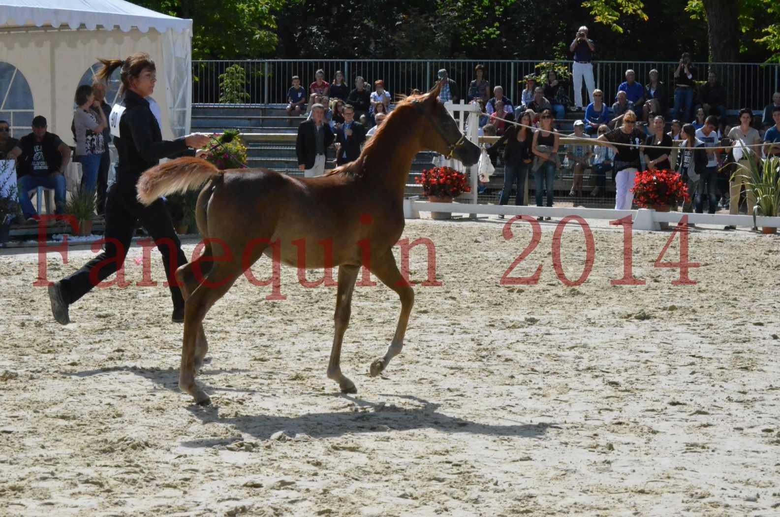 CHAMPIONNAT DE FRANCE 2014 A POMPADOUR - Championnat - TSAR KENZA - 51