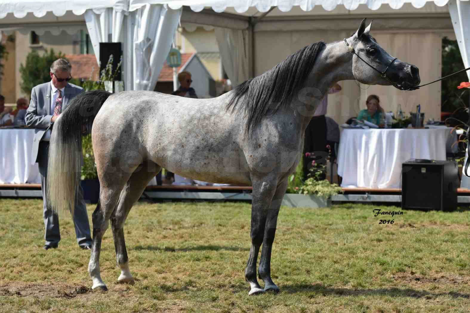 International Arabian Horse Show B de VICHY 2016 - ISABELLA - Notre Sélection - 09