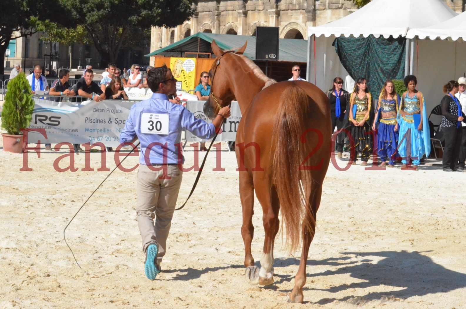 Concours National de Nîmes de chevaux ARABES 2014 - Championnat - MASSAI DE BARREL - 50