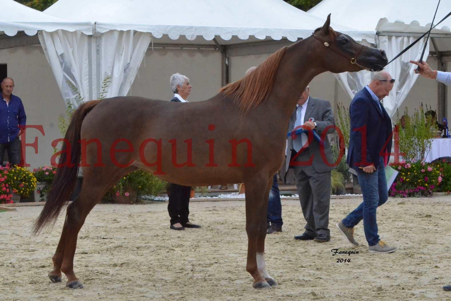 CHAMPIONNAT DE FRANCE 2014 A POMPADOUR - Notre Sélection - BADI'AH DE CARTHEREY - 05