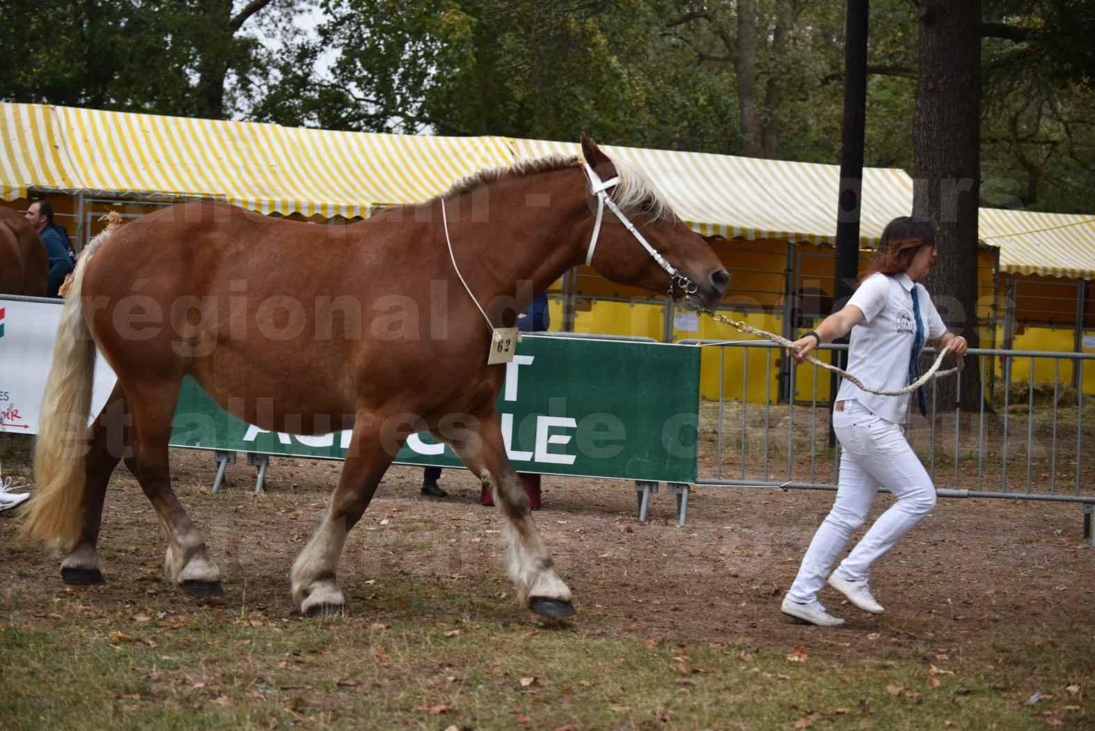 Concours Régional de chevaux de traits en 2017 - Jument & Poulain Trait COMTOIS - DAKOTA DU GARRIC - 17