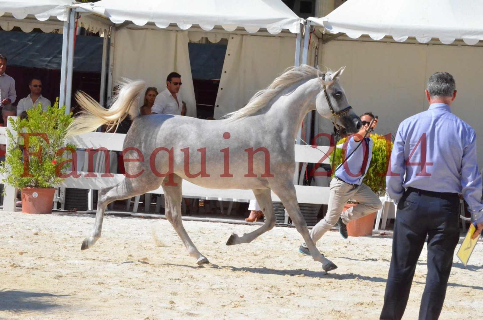Concours national de Nîmes 2014 - Championnat Femelles Juniors - VOLODIA DE LAFON - 10