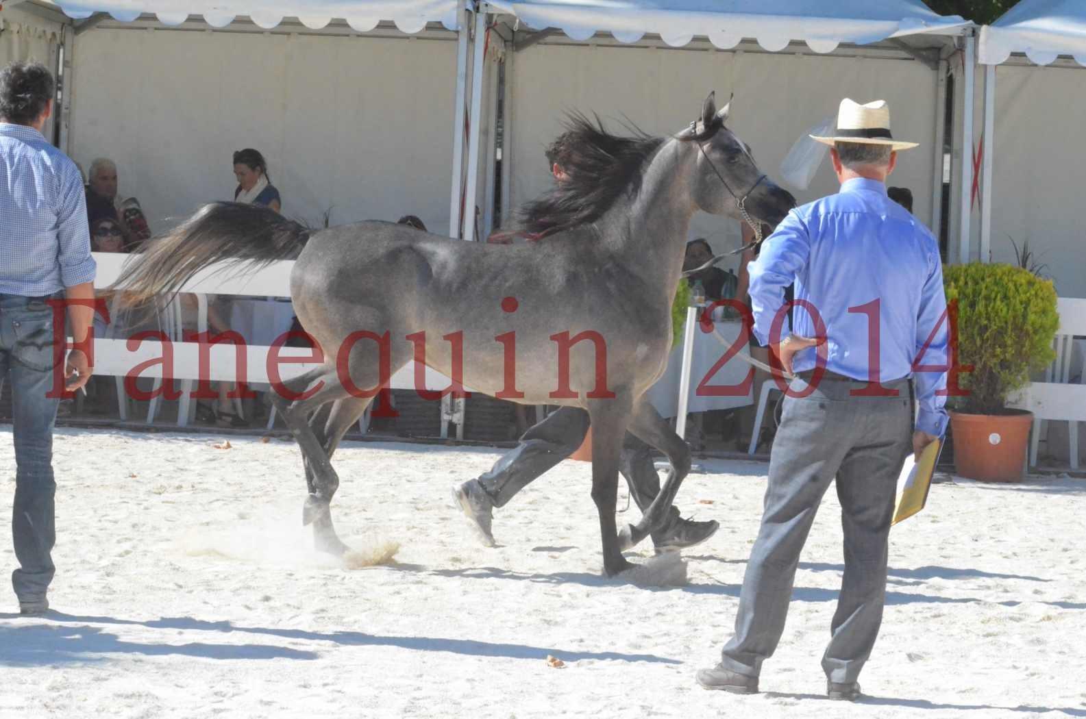 Concours National de Nîmes de chevaux ARABES 2014 - Championnat - JOSEPH'S BOUZIOLS - S 14