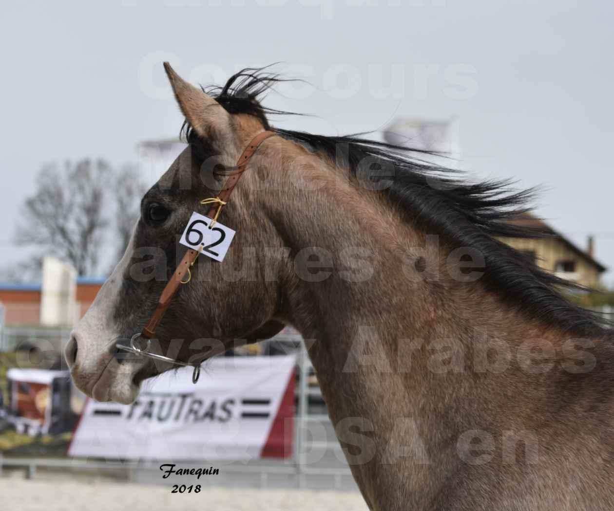 Concours d'élevage de Chevaux Arabes - Demi Sang Arabes - Anglo Arabes - ALBI les 6 & 7 Avril 2018 - FLORIA DU PUECH - Notre Sélection - Portraits - 2