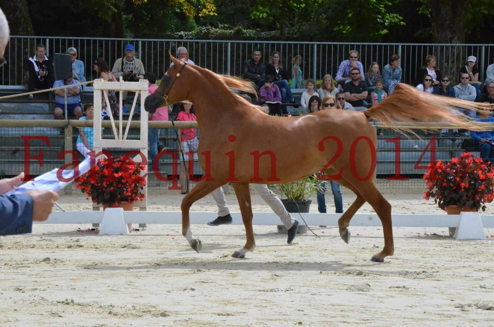 CHAMPIONNAT DE FRANCE 2014 A POMPADOUR - Championnat - LUTFINAH JA - 06