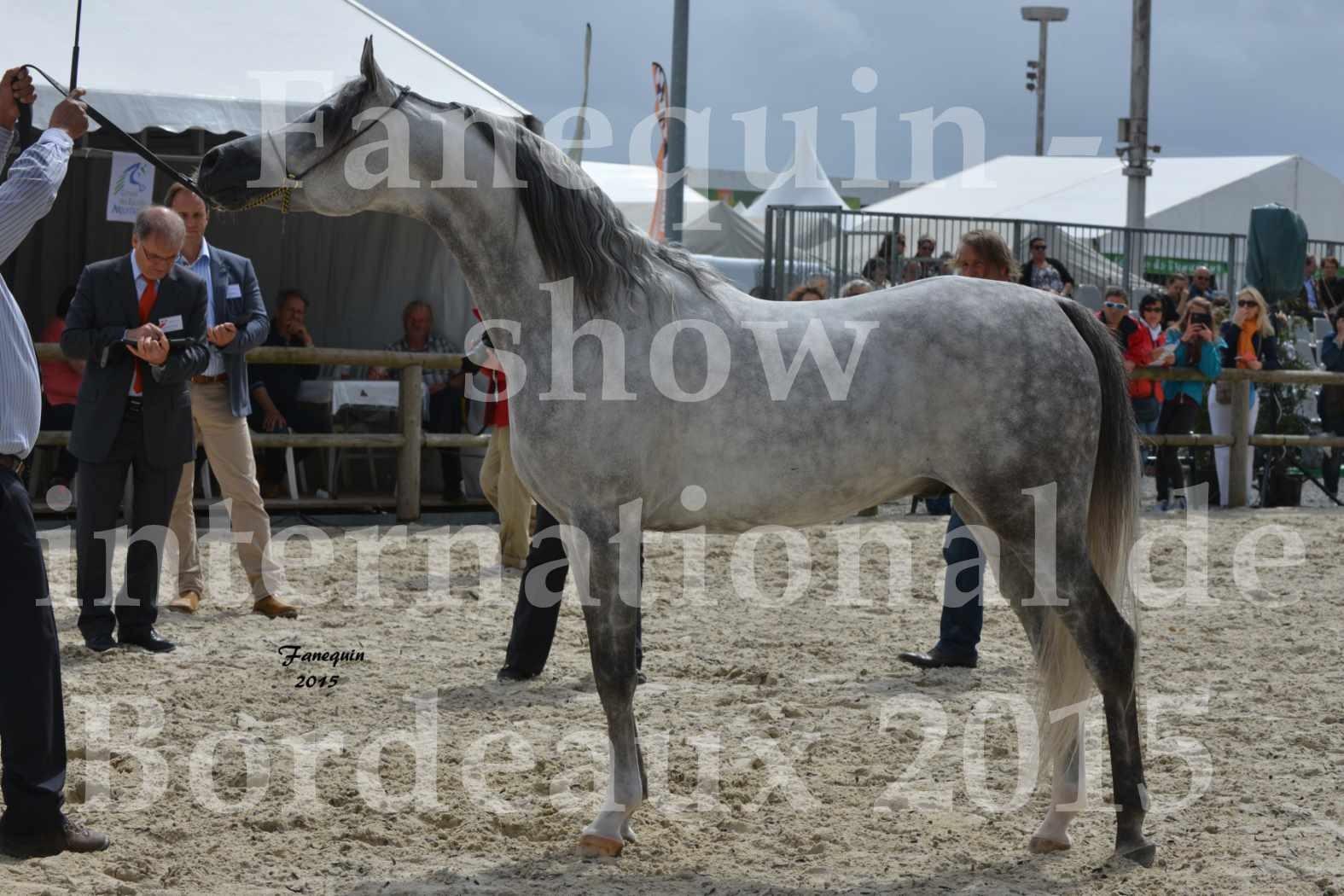 Salon Equitaine de Bordeaux 2015 - Show International de chevaux ARABES - 5