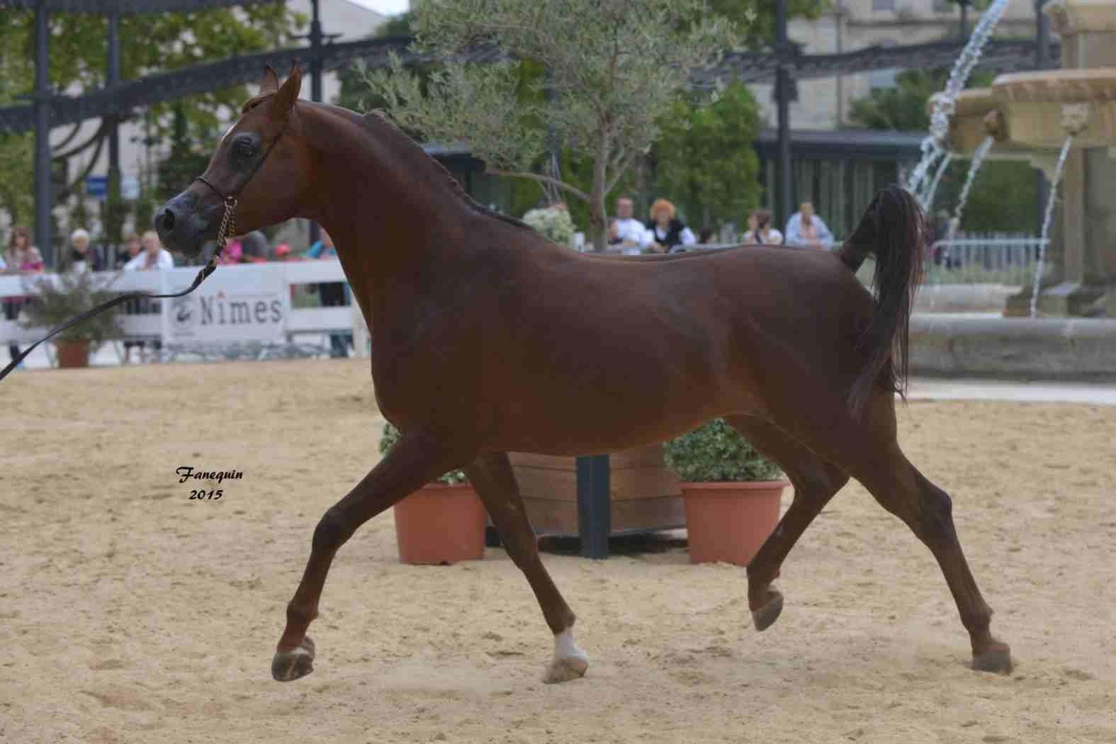 KARAM ALBIDAYER en 2015 - Concours national Nîmes prestige - notre sélection - 08