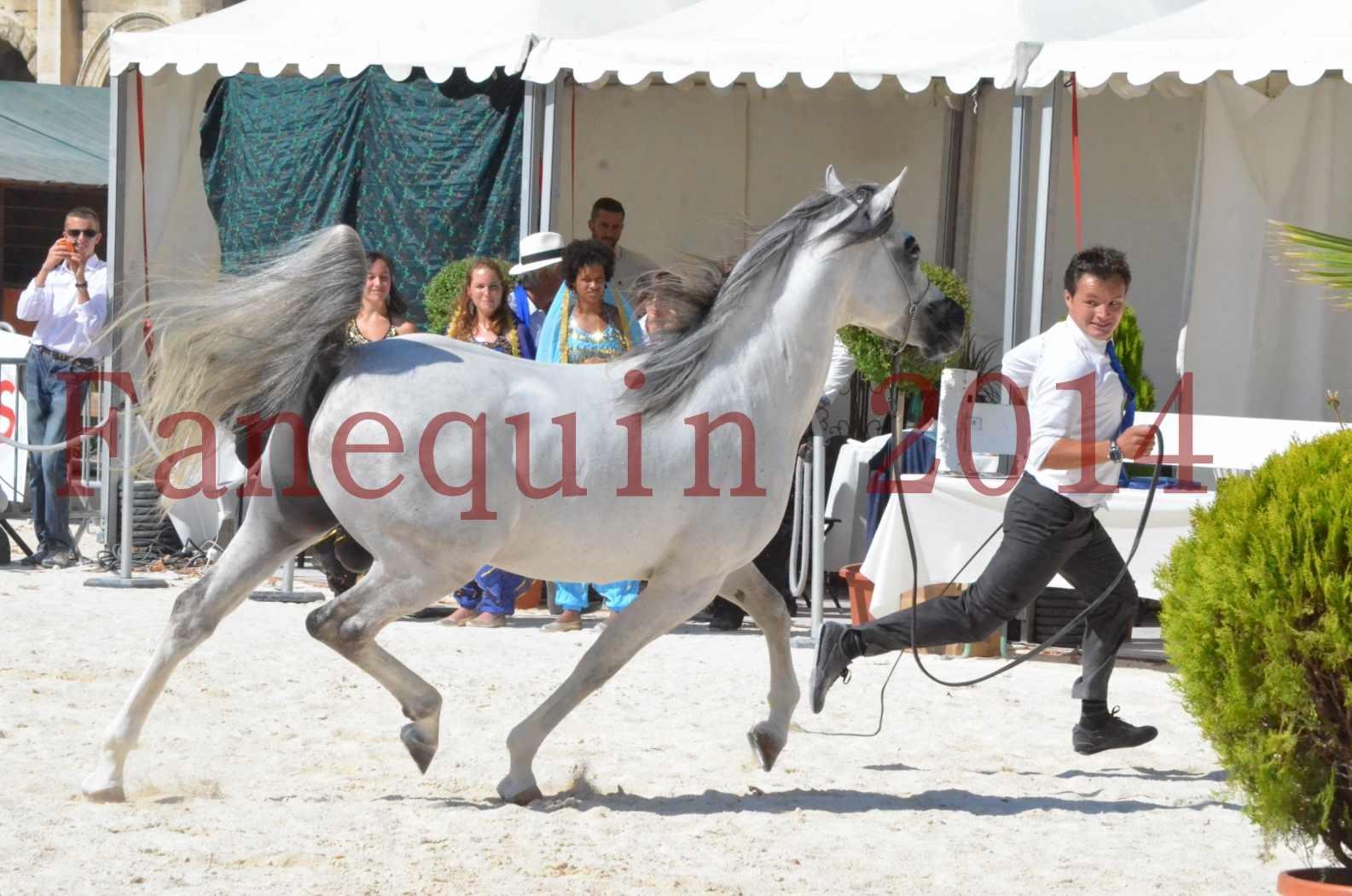 Concours National de Nîmes de chevaux ARABES 2014 - Sélection - SHAOLIN DE NEDJAIA - 63