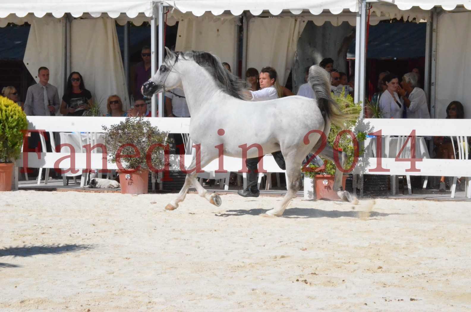 Concours National de Nîmes de chevaux ARABES 2014 - Sélection - SHAOLIN DE NEDJAIA - 32
