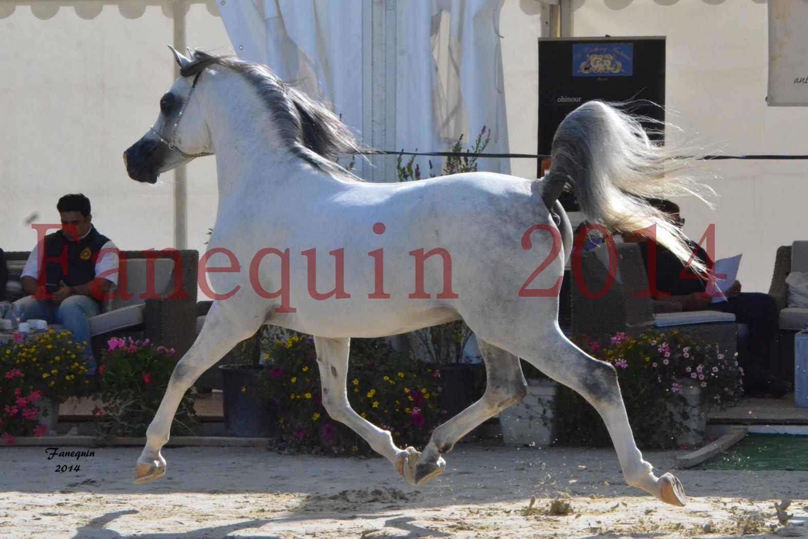 CHAMPIONNAT DE FRANCE  2014 A POMPADOUR - Notre Sélection - SHAOLIN DE NEDJAIA - 13