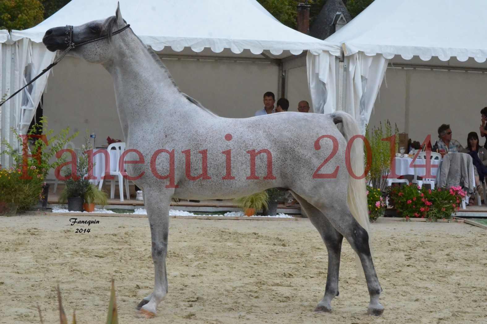 CHAMPIONNAT DE FRANCE  2014 A POMPADOUR - Notre Sélection - SHEYK DE GARGASSAN - 15