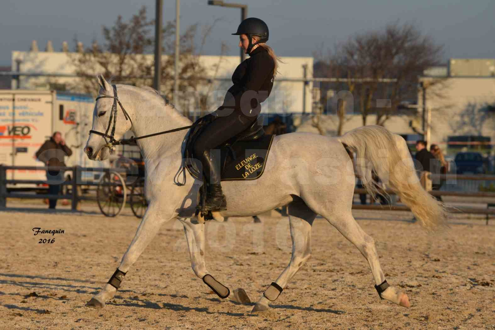 Cheval Passion 2016 - Présentation extérieure de chevaux Arabes montés - 17