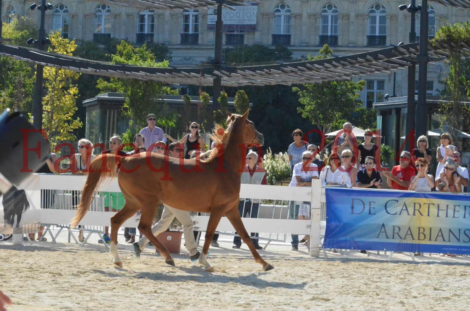 Concours National de Nîmes de chevaux ARABES 2014 - Championnat - MASSAI DE BARREL - 06