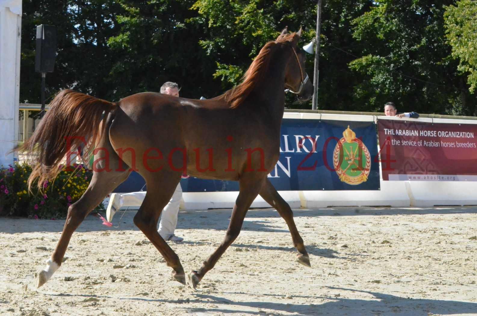 Championnat de FRANCE 2014 - Amateurs - LAMAL - 44