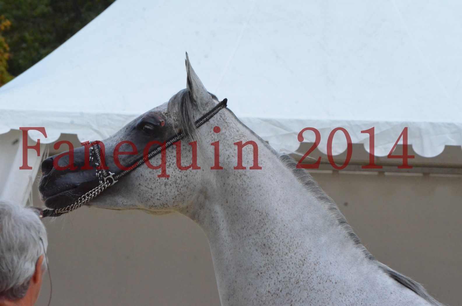 CHAMPIONNAT DE FRANCE  2014 A POMPADOUR - Championnat - SHEYK DE GARGASSAN - 20