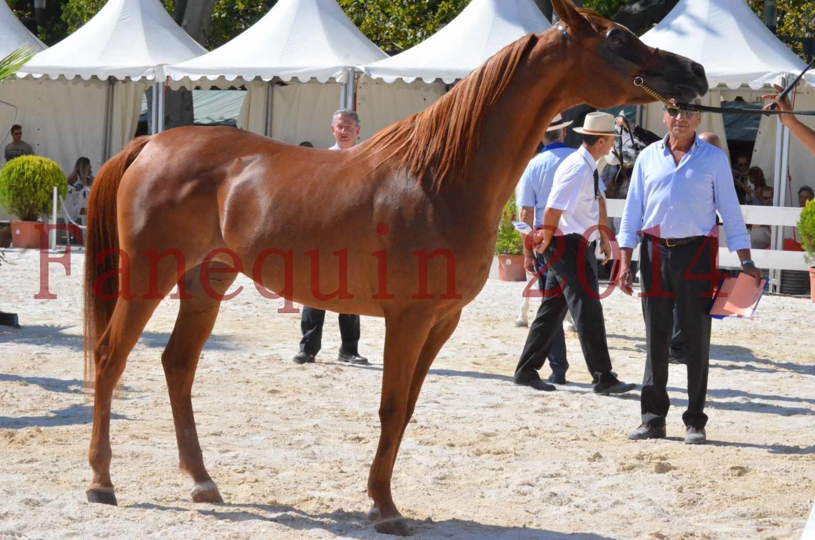 Concours National de Nîmes de chevaux ARABES 2014 - Championnat - MASSAI DE BARREL - 39