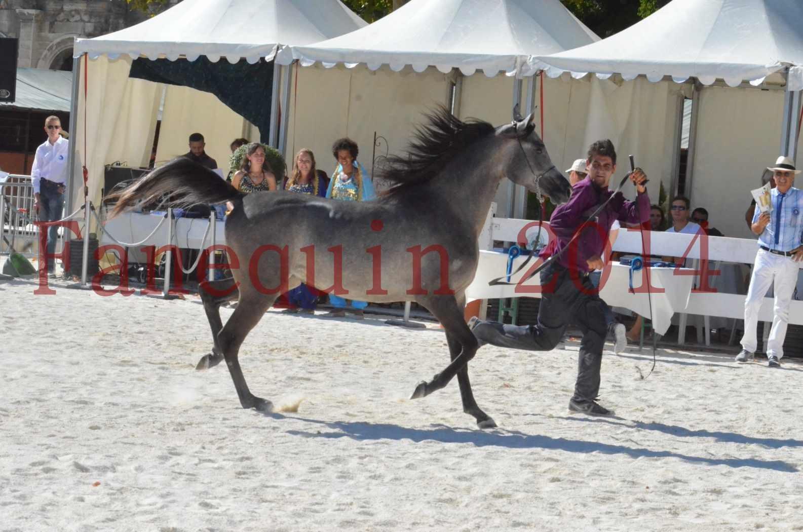 Concours National de Nîmes de chevaux ARABES 2014 - Championnat - JOSEPH'S BOUZIOLS - S 02