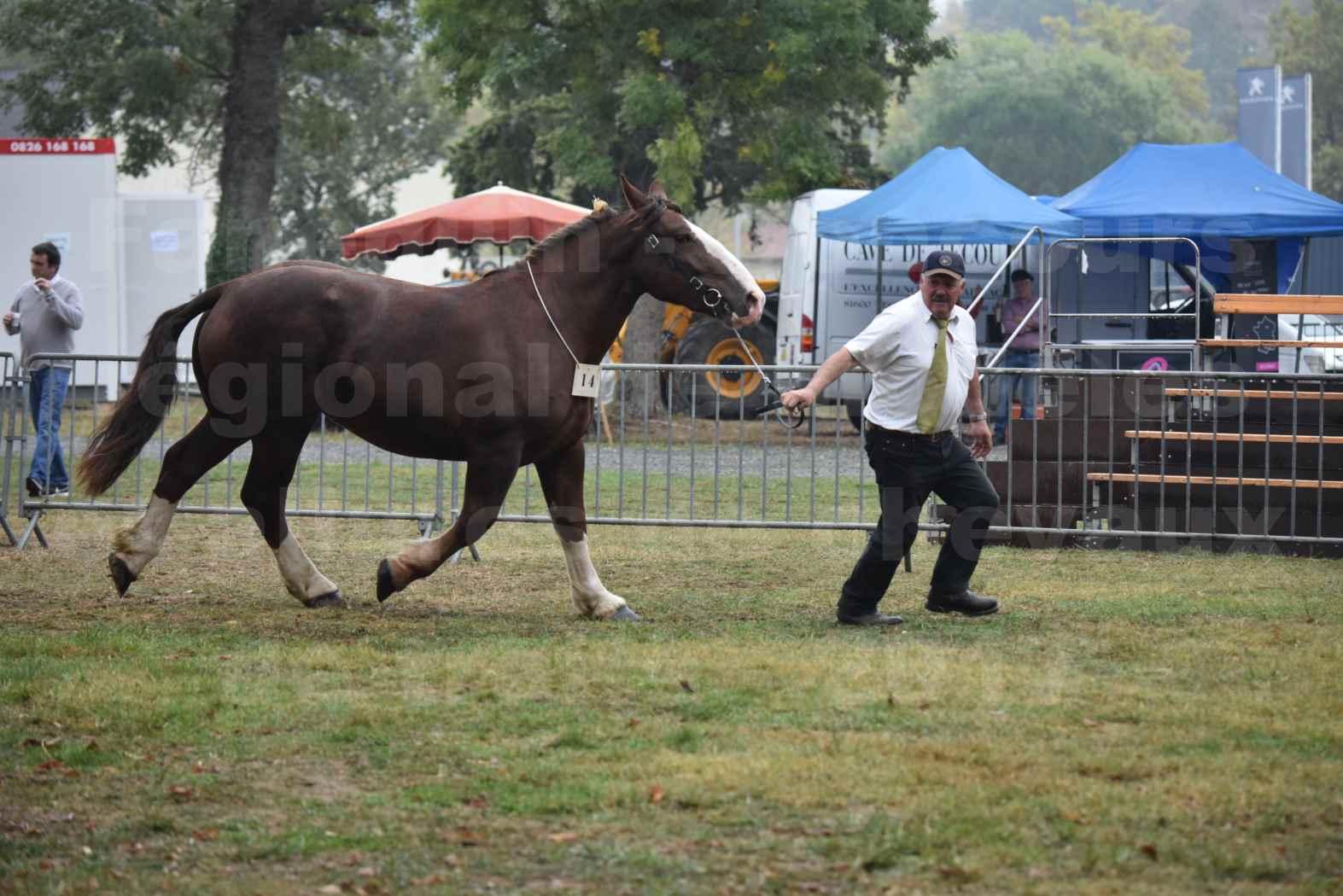 Concours Régional de chevaux de traits en 2017 - Trait BRETON - FRIVOLE DU JAUDY - 03