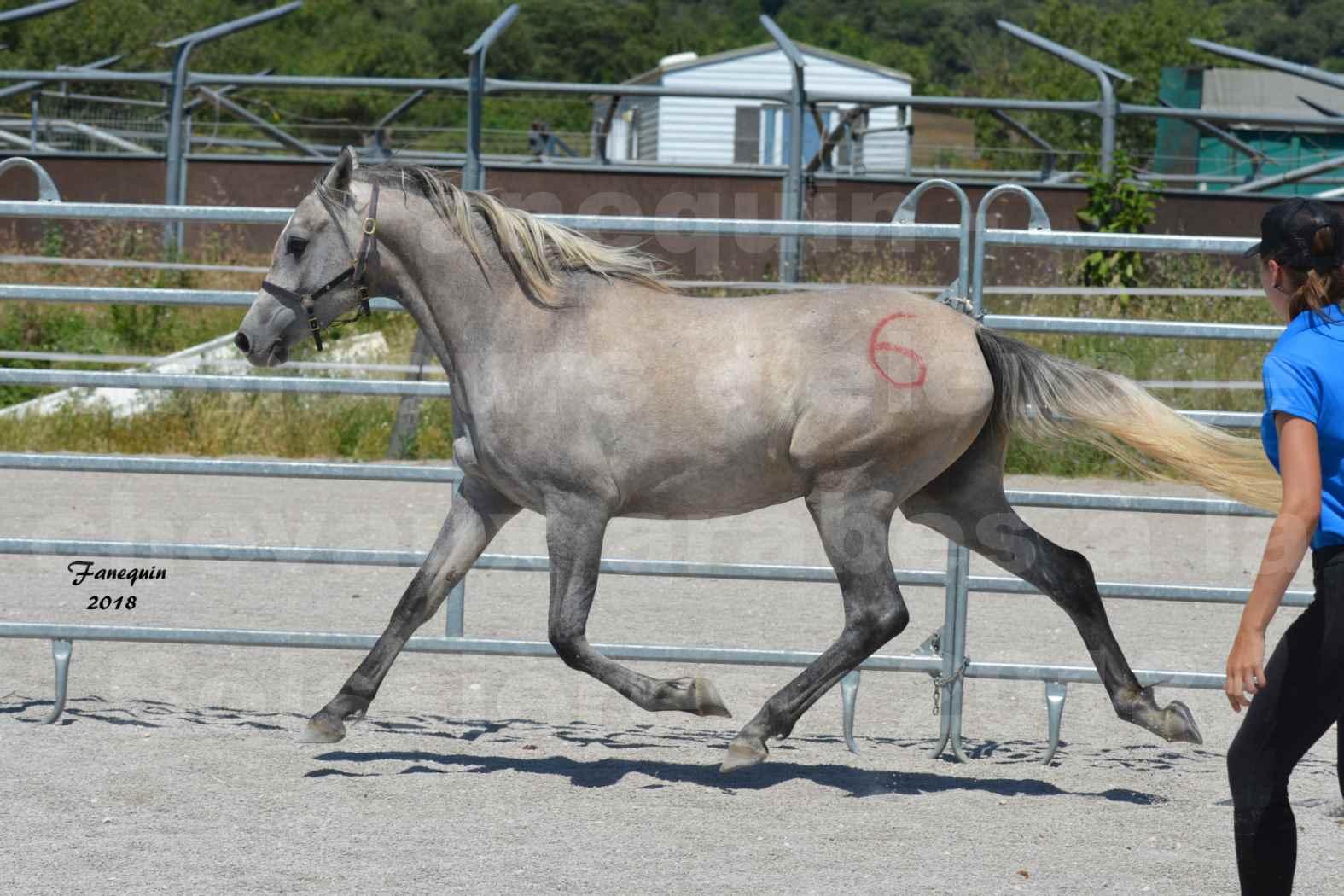 Concours d'Elevage de chevaux Arabes  le 27 juin 2018 à la BOISSIERE - GAZAK D'AURIERES - 05