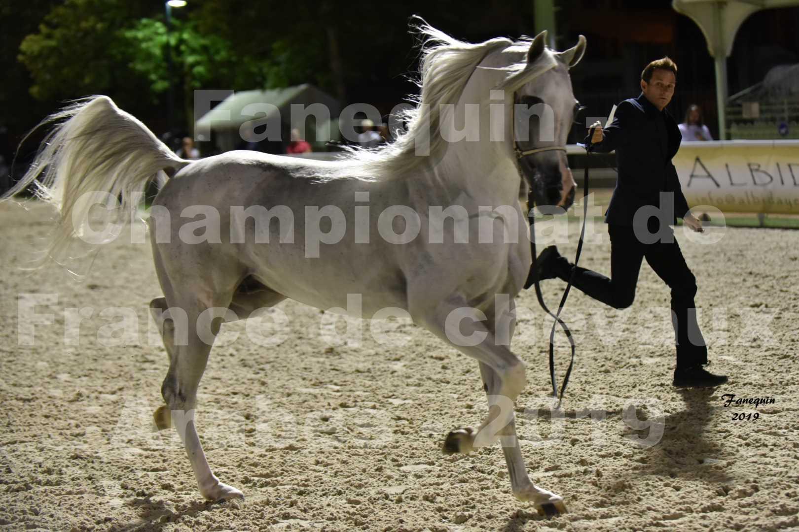 Championnat de France des chevaux Arabes en 2019 à VICHY - SHAMS EL ASHIRAF - 3