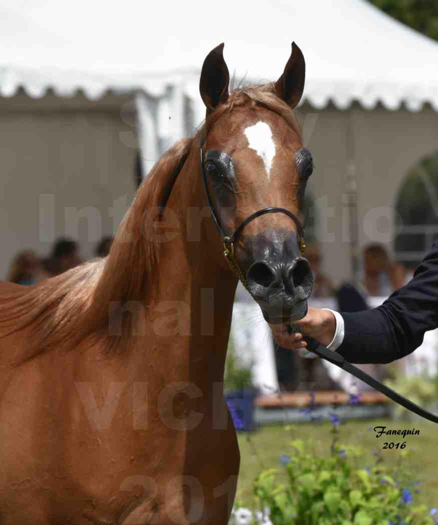 International Arabian Horse Show B de VICHY 2016 - JA FALAENE - Notre Sélection - Portraits - 1